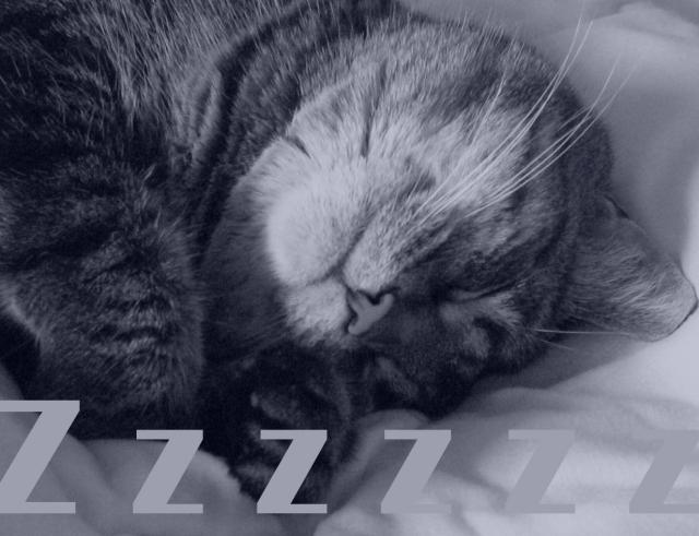 sl_cat copy