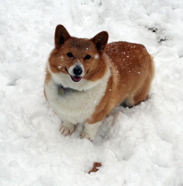 nellie_snow2