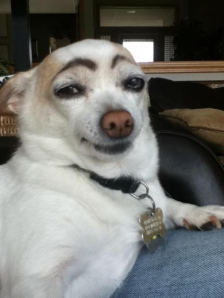eyebrow_dog