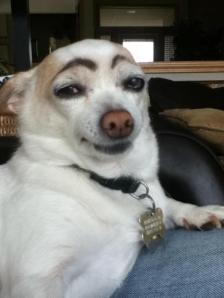 eyebrow_dog