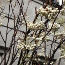 detail_berries copy