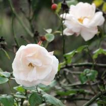 detail_flowers3