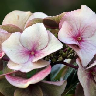 detail_flowers4