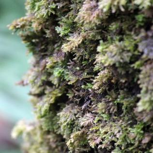 detail_moss