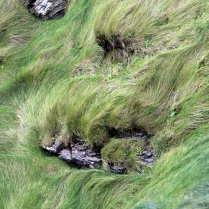 detail_windygrass