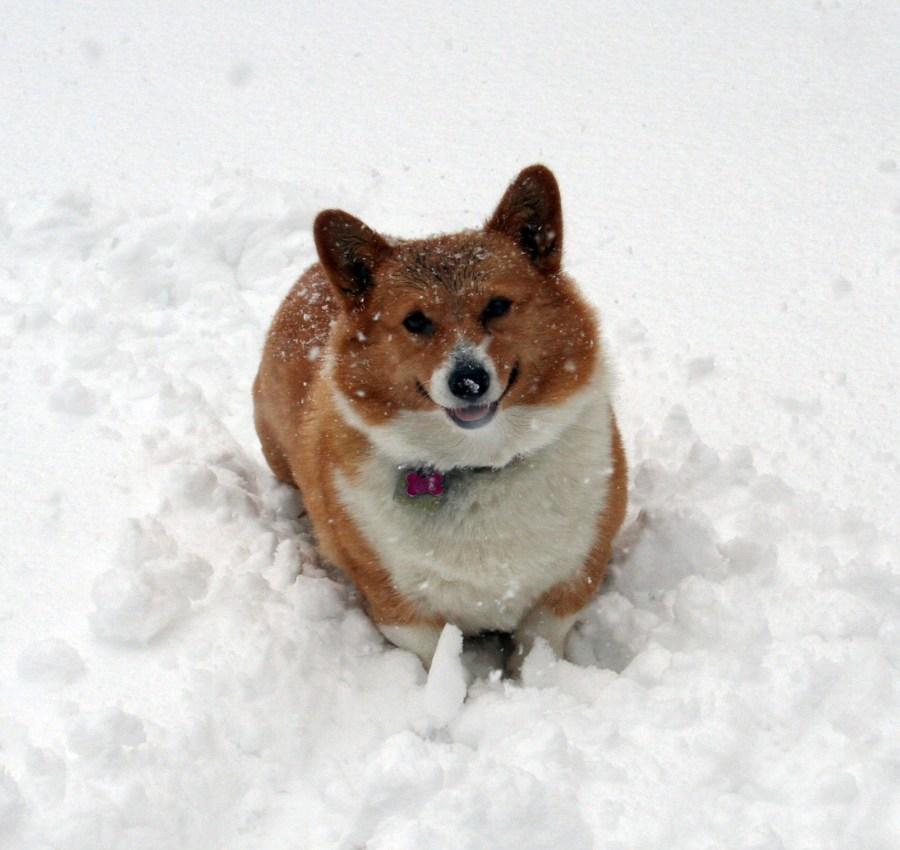 2-nellie_snow_happy