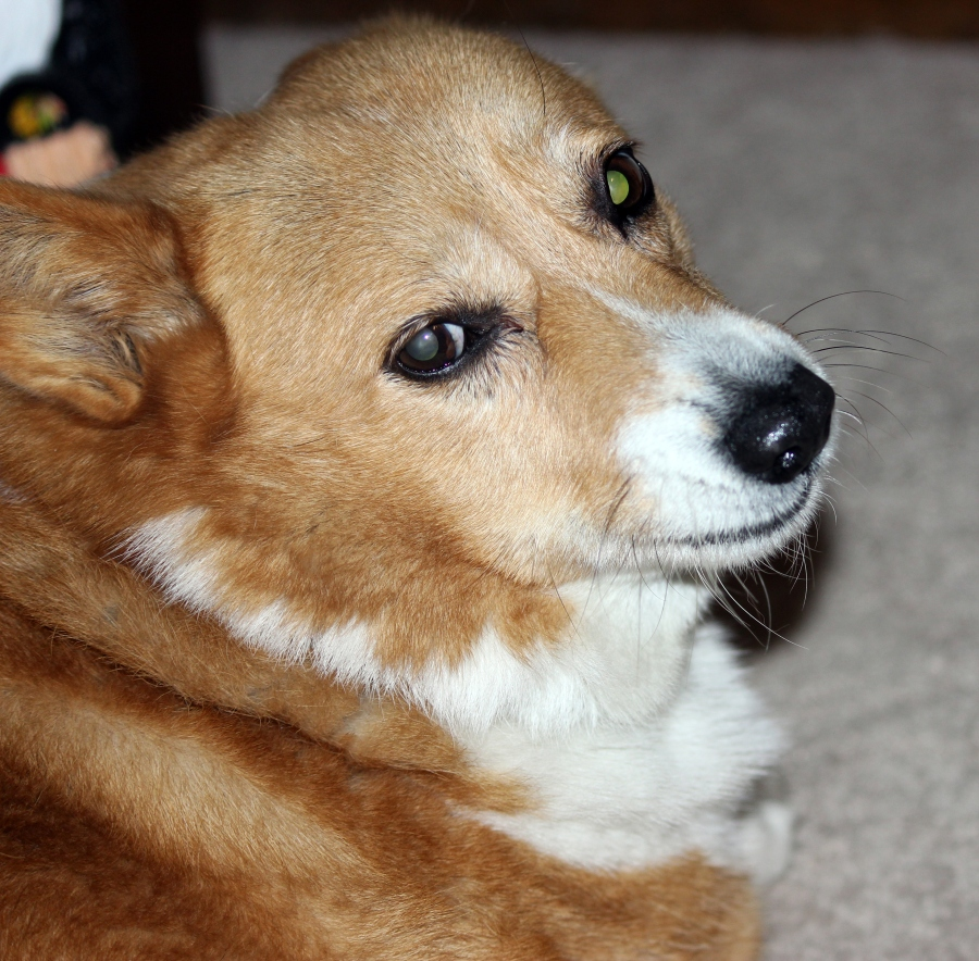 7-n_dog