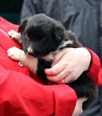 puppy_crop