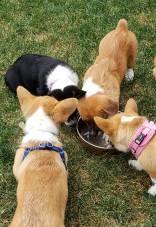 pups4