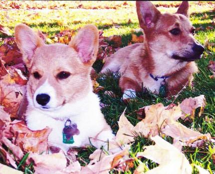 2-dogsblog1